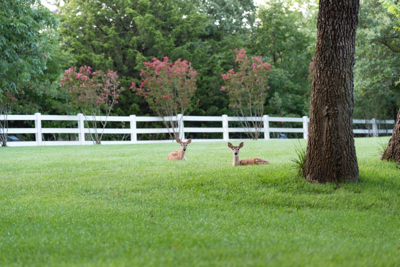 Split Rail Fence | Wildlife Friendly Fencing