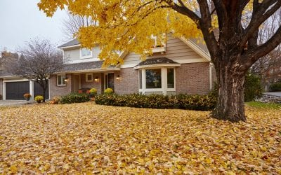3 Tips for Homeowners to Prepare your Yard for Fall and Winter