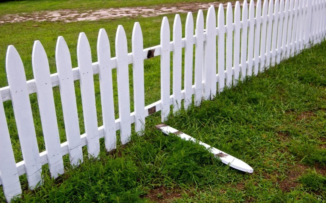 Benefits of Cedar Fencing Opposed To Others