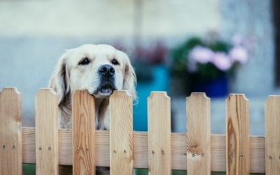Should You Have a Front Yard Fence?