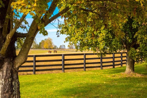 Ranch Rail Fence