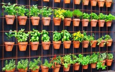 Adding A Vertical Garden to Your Backyard