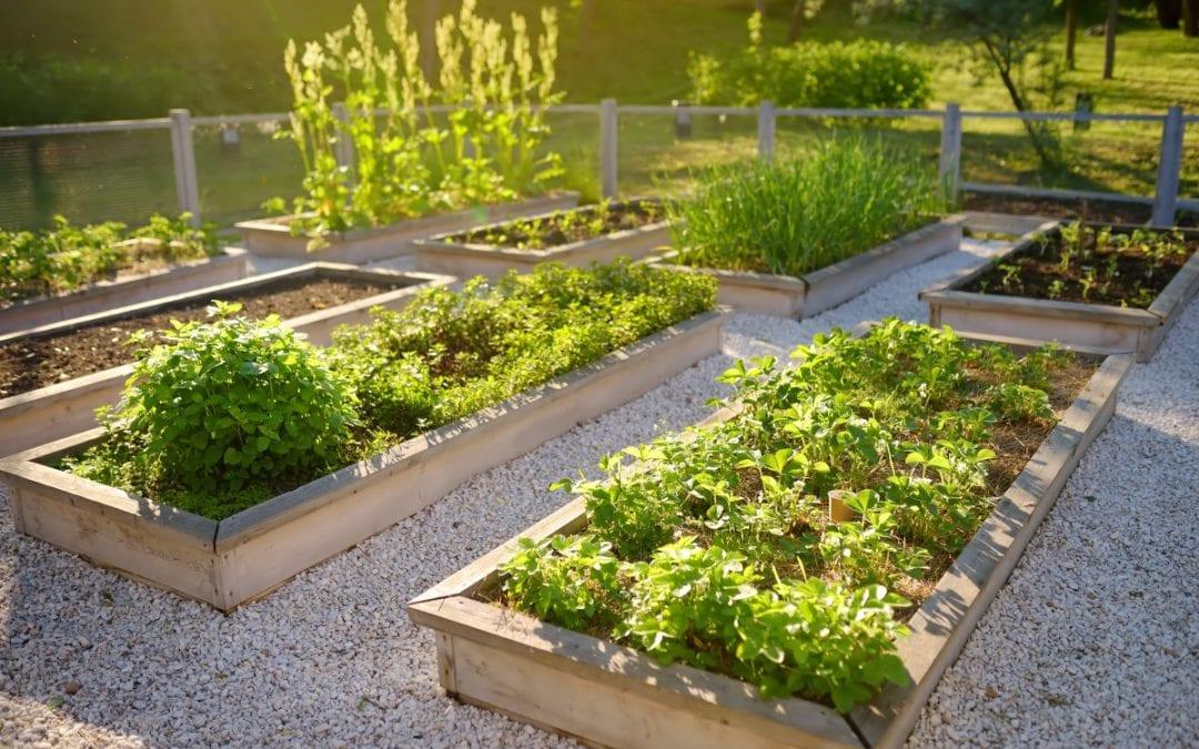 2020 Garden Trends