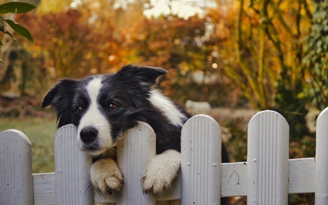 Fencing Solutions For Our Furry Friends