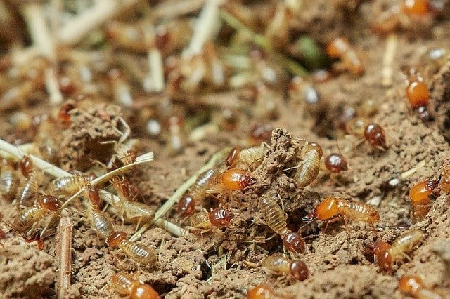 Protect Your Fence from Termites