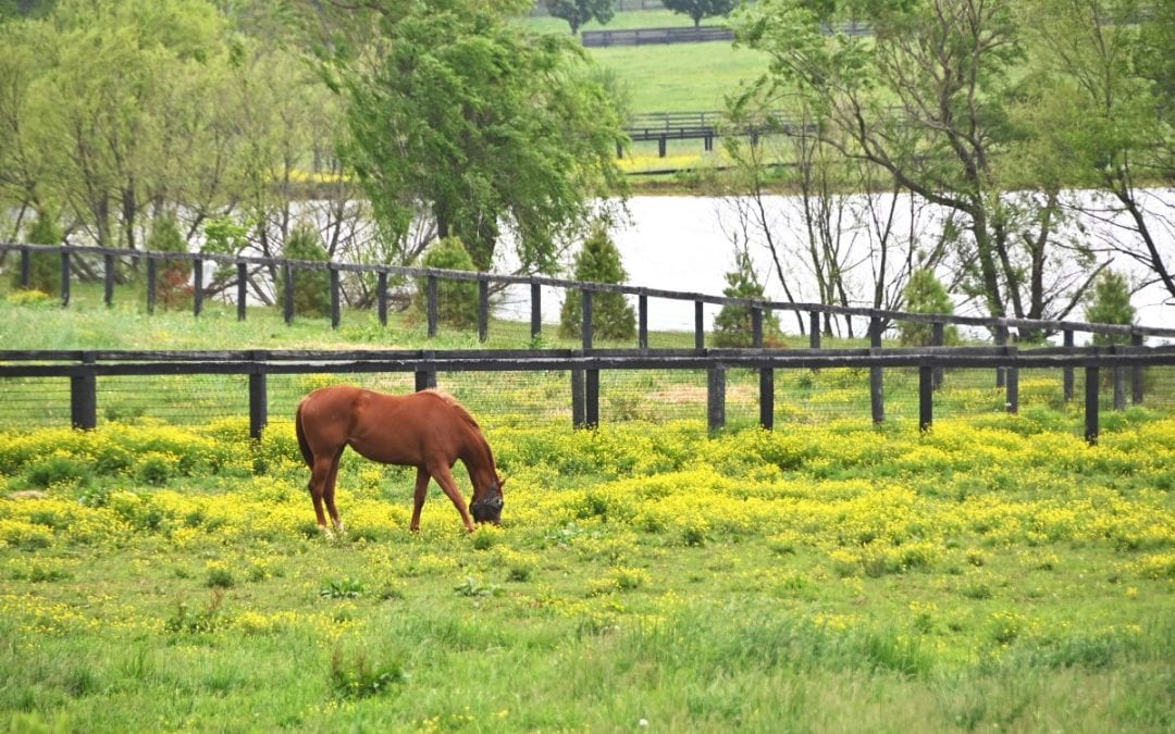 Preparing Your Ranch for Spring