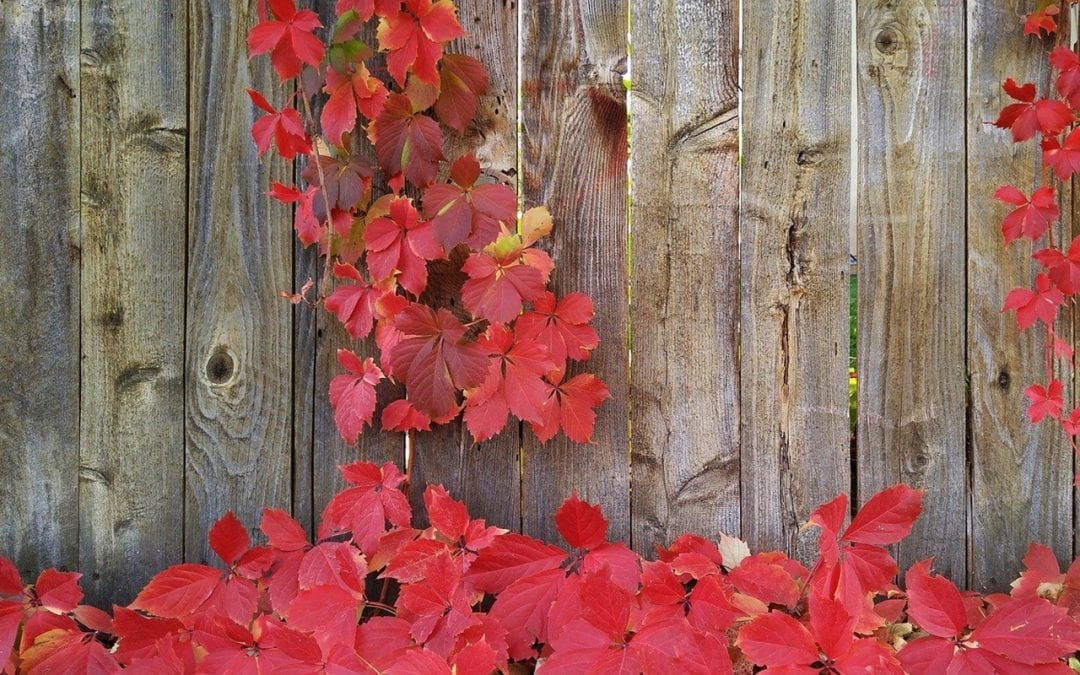 Finding the Best Fencing Materials for the Colorado Front Range